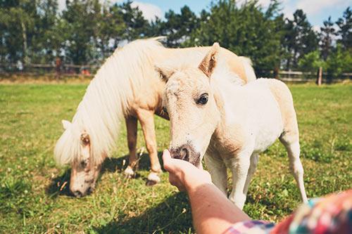 Pferdereiten mit Schau auf's Land