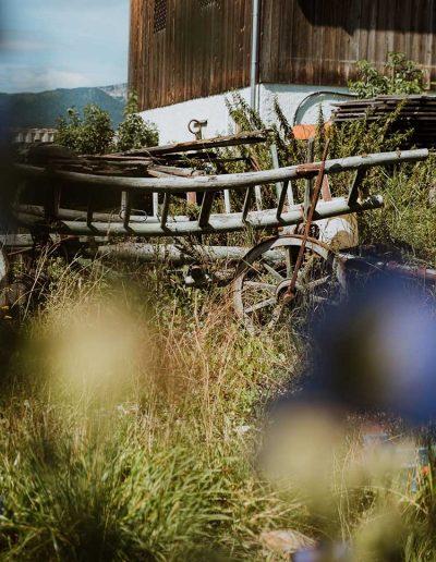 Edelweiß am Seebacherhof