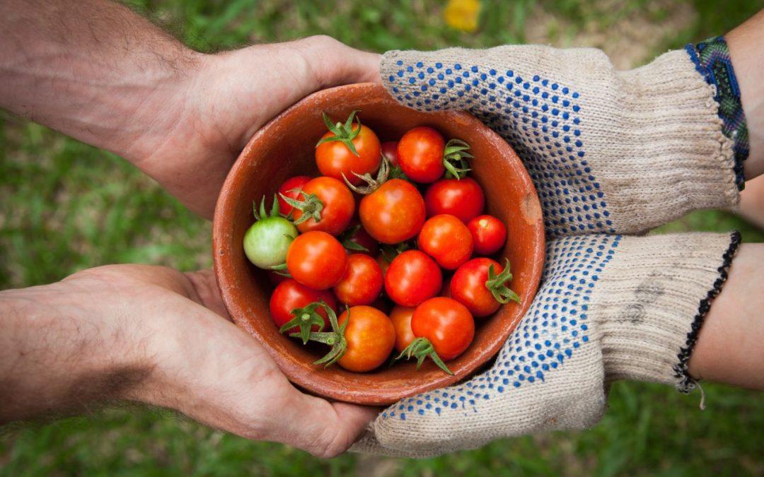 Solidarische Landwirtschaft (SoLaWi)